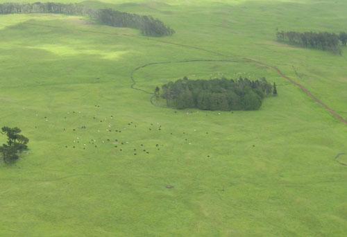015-cows
